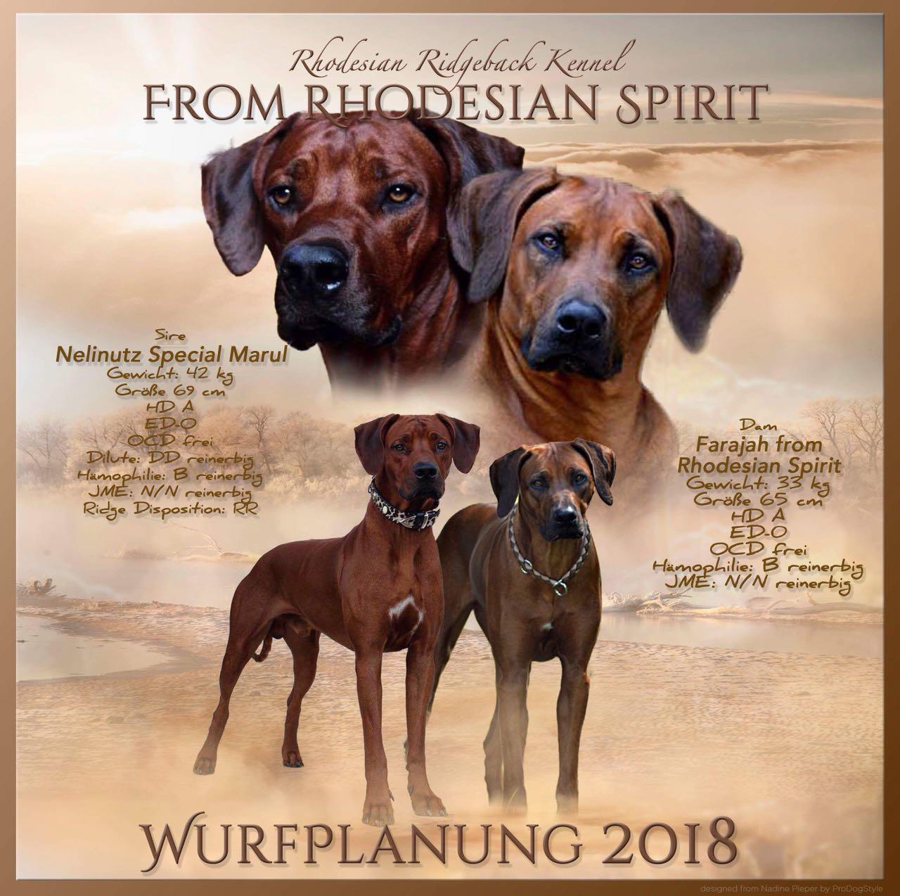 """H-Wurf im Kennel """"from Rhodesian Spirit"""" Sommer 2018"""