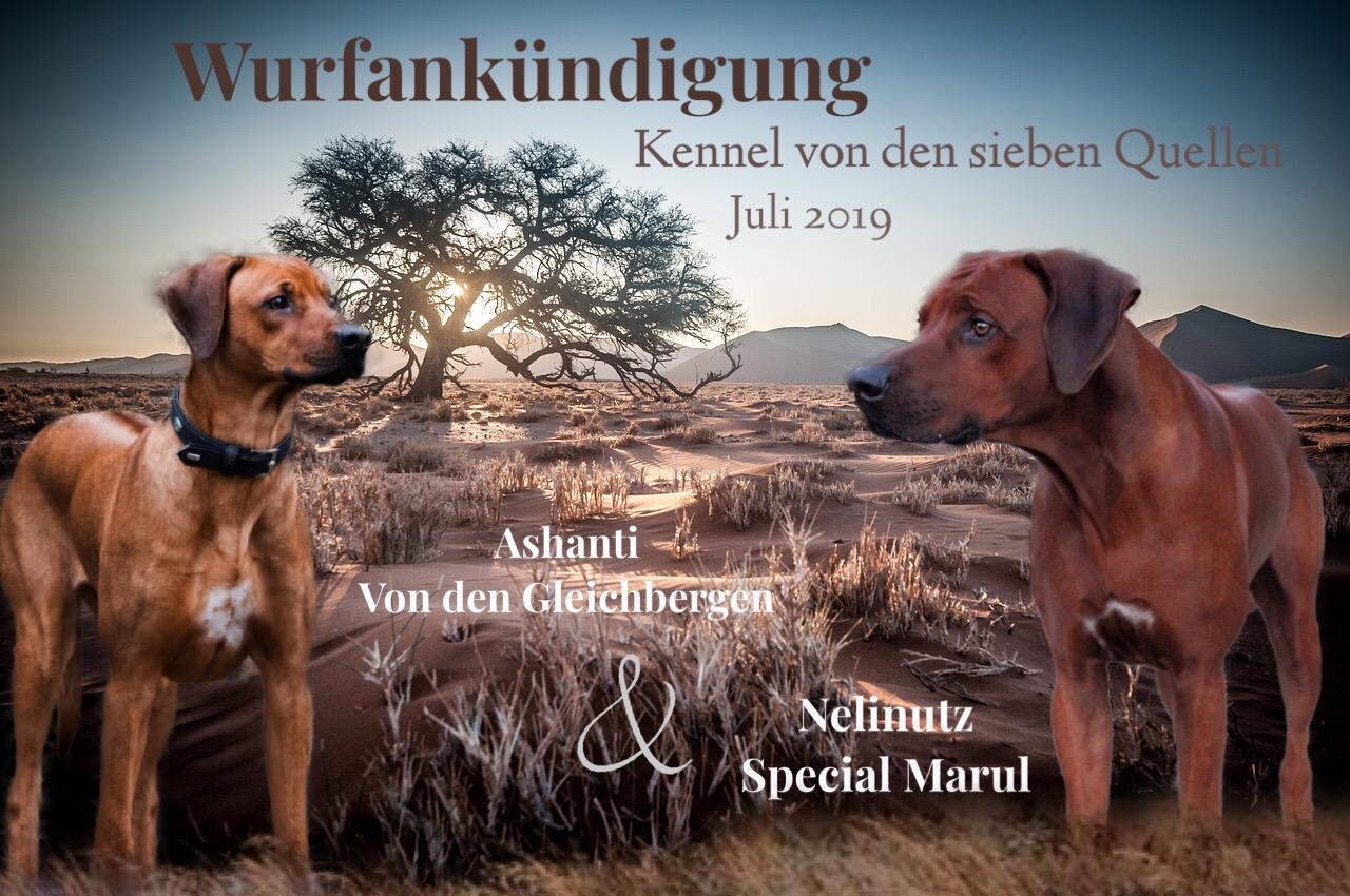 """A-Wurf im Kennel """"von den sieben Quellen"""" Sommer 2019"""