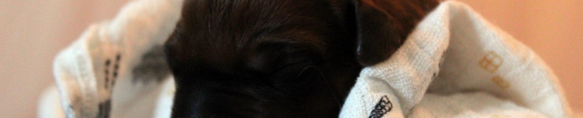B-Wurf in unserem Kennel